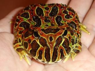 Frog003_1