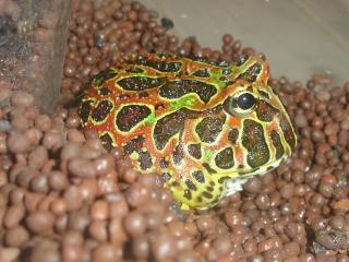 Frog011