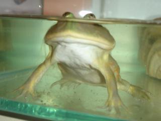 Frog014