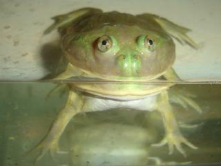 Frog015